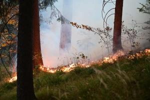 На сході Австрії вирує велика лісова пожежа