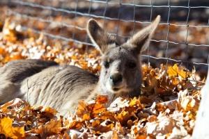 До харківського екопарку з Ізраїлю прибули кенгуру та примати