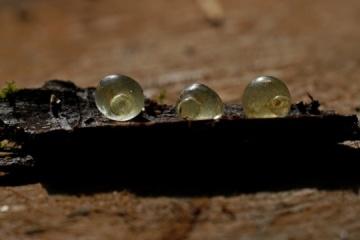 Unique Scythian glass pendants found in Poltava region