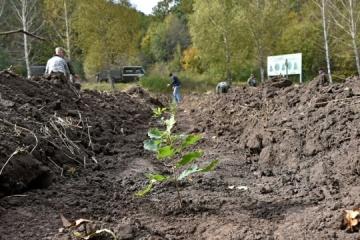 """""""Grünes Land"""": Tausend Eichenbäume in Region Tscherkassy gepflanzt"""