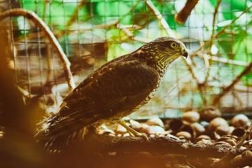 Un centre de soins pour oiseaux s'est ouvert dans la région de Lviv