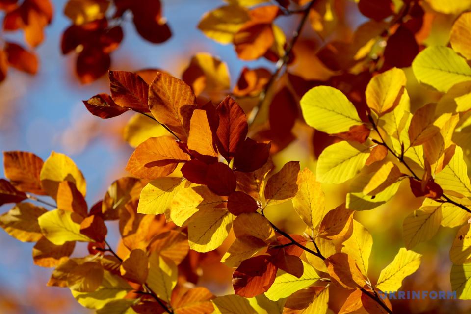 Буковий ліс на Івано-Франківщині / Фото: Юрій Рильчук, Укрінформ